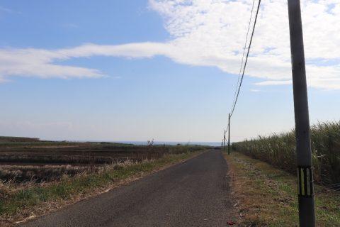 『秒速5センチメートル』通学路のさとうきび畑 写真